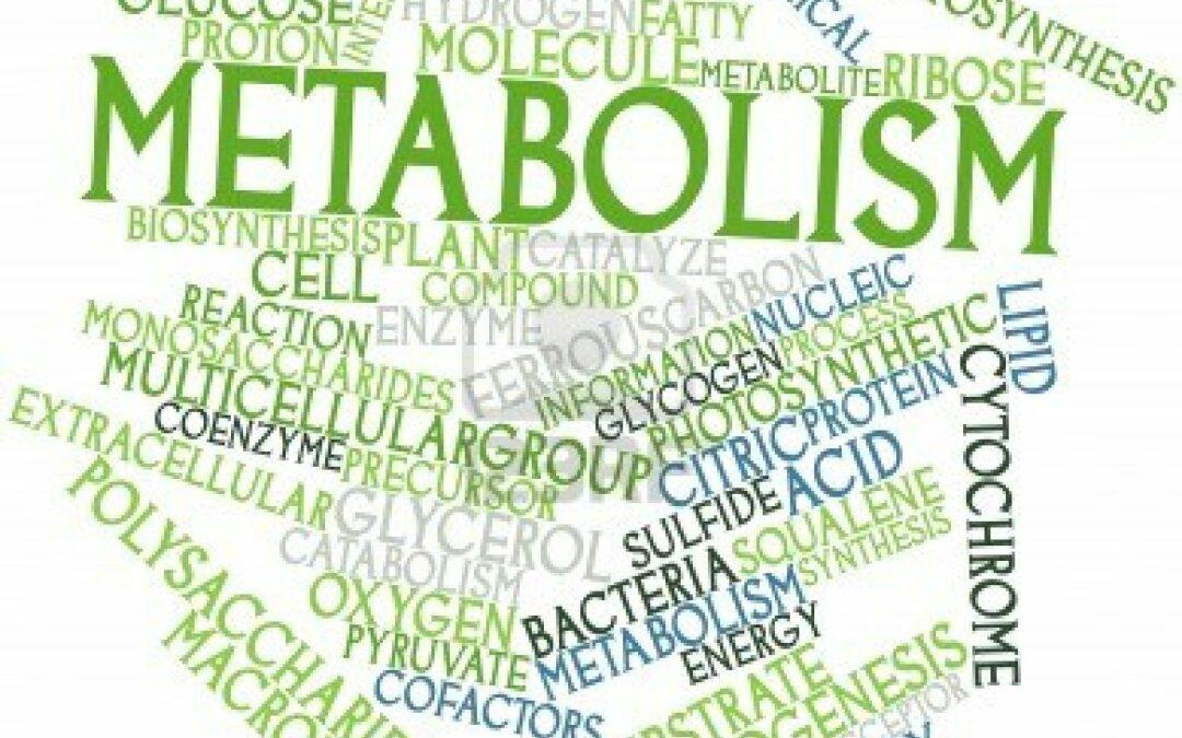 6 Dicas para manter o metabolismo acelerado ao longo do dia